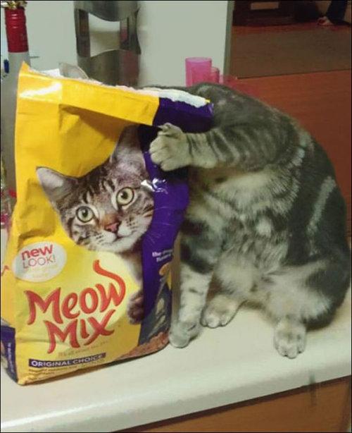 楽しい猫たち12