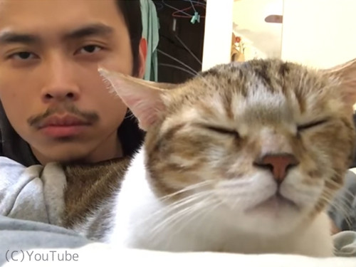 リズム感がありすぎる猫01