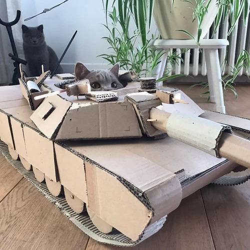 ダンボール猫戦車01