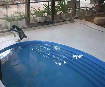 タイの動物園02