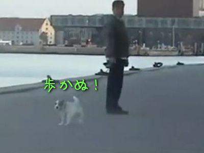 歩くのがきらいな犬