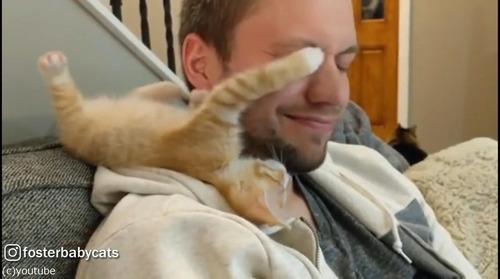 子猫が顔を襲ってくる01