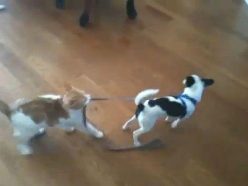 犬「あれ?進めない!」猫「ククク……」01