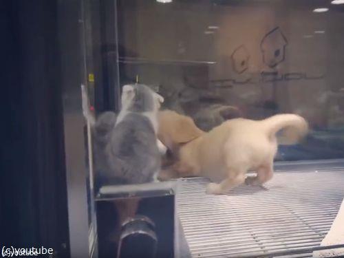 隣の犬に会いに行く猫07