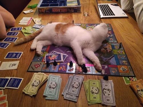 猫に敗北した人々10