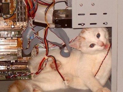 パソコンの上の猫11