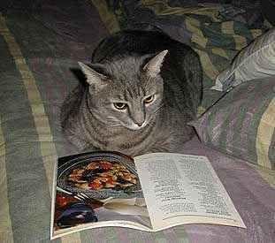 とても賢そうなインテリ猫たち06
