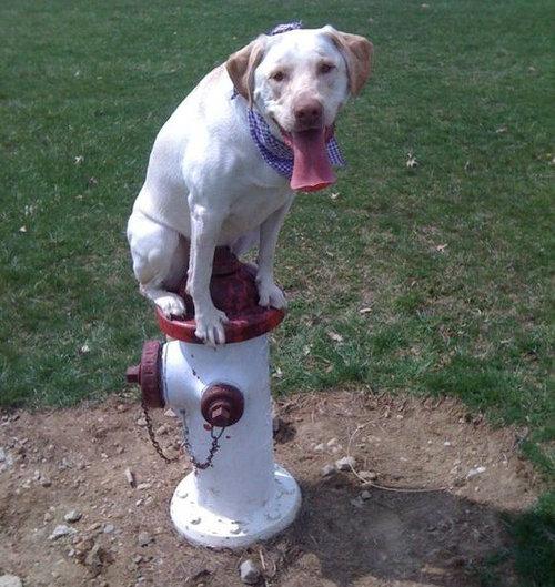 近所の犬02