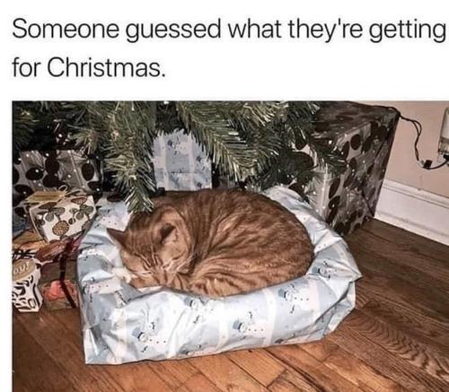 ツリーの下に置いてあったクリスマスプレゼントの中身がわかった01