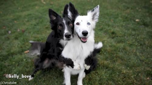 写真写りを気にする犬たち07
