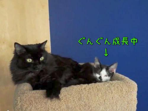 猫2匹はいつも一緒00