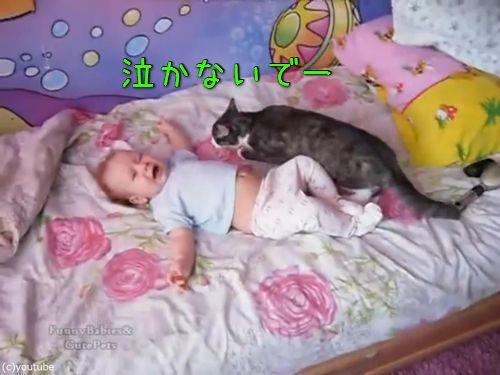 赤ちゃんをあやす猫00