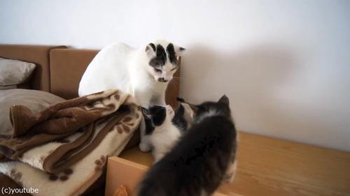 子猫に優しいオス猫03