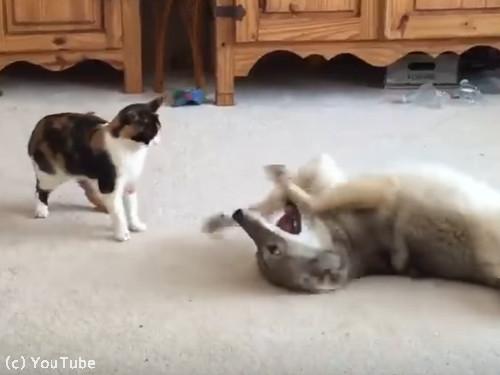 猫とコヨーテ02