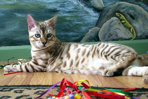 前世は別の動物だったであろう猫08