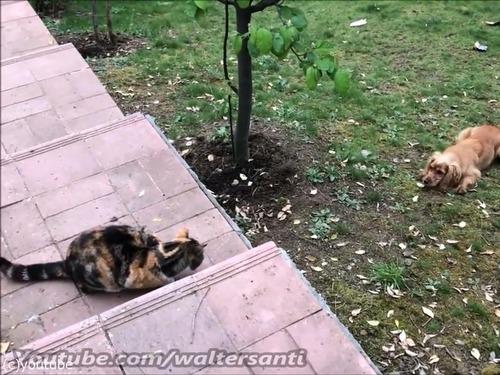 庭に入れさせない猫vs入りたい犬00