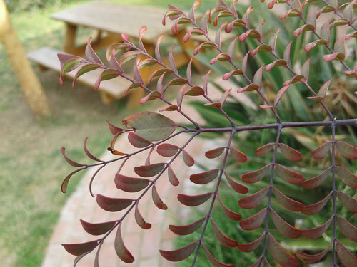 枝の代わりに間違って葉っぱを伸ばした木01