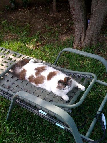 夏を満喫する猫07