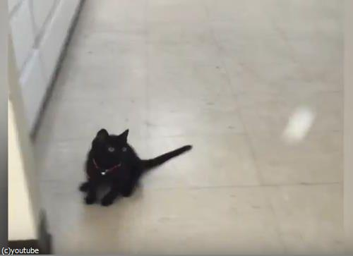 ピンポン猫02