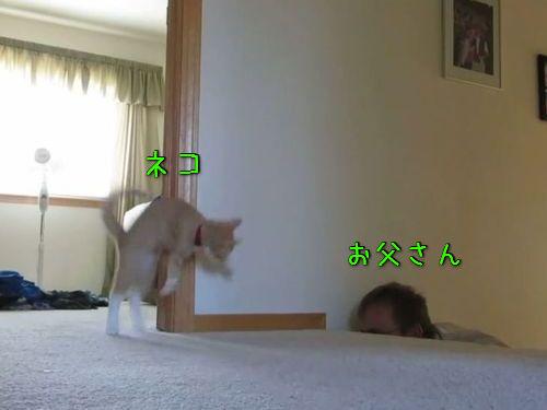 子猫と全力で遊ぶお父さん00