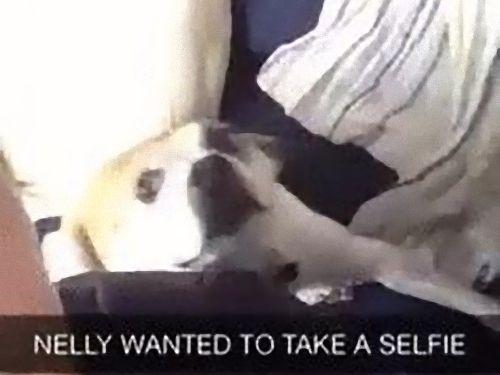 やけに写真写りを気にする犬03