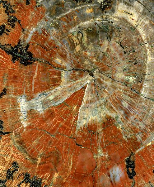 木の化石03