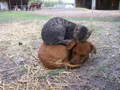 どこでも眠る猫16