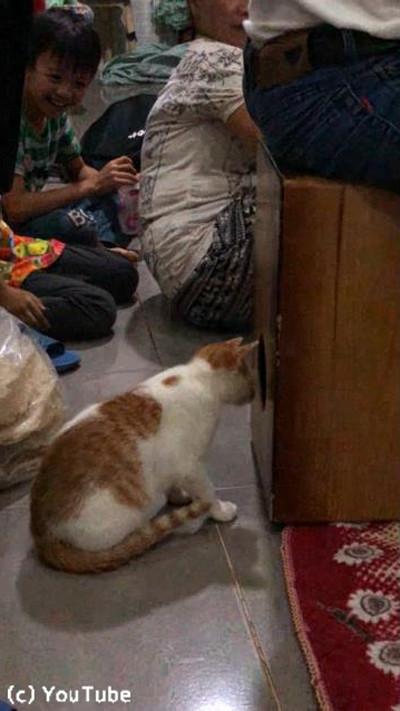 「カホン」に驚きながらも興味津々の猫03