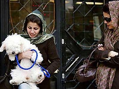イランの犬