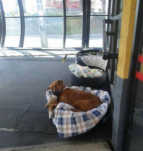 ブラジルのバス停で犬に布団03