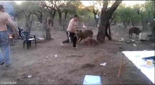 親豚が激怒03