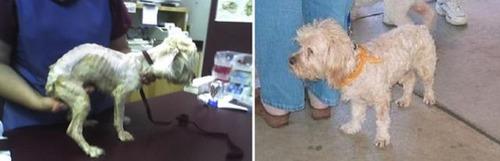 救助された犬や猫08