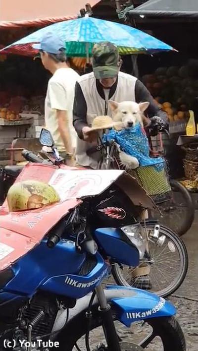 降りだした雨…飼い主さんが愛犬にとった行動に心温まる04