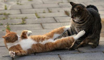 壮絶なる2匹の猫16