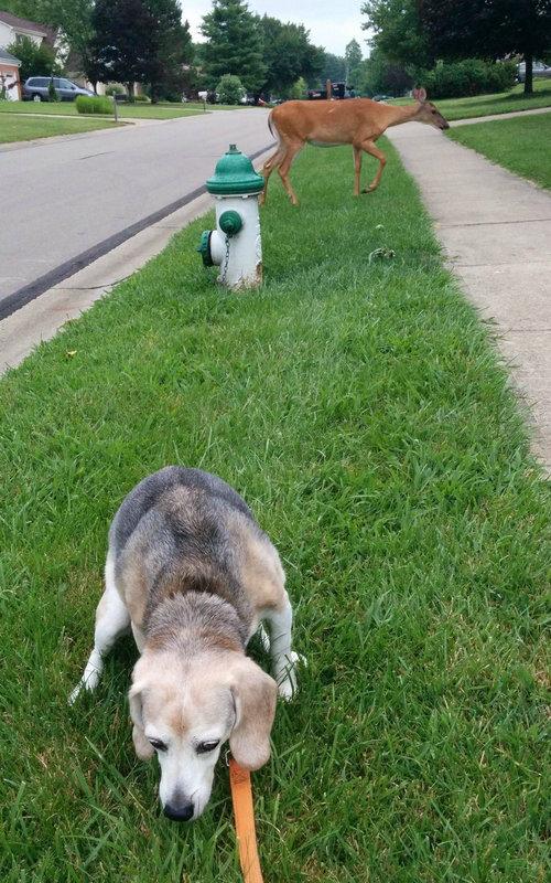 うちの猟犬が警戒態勢に入った01