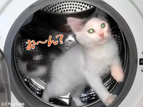 ハムスター猫00