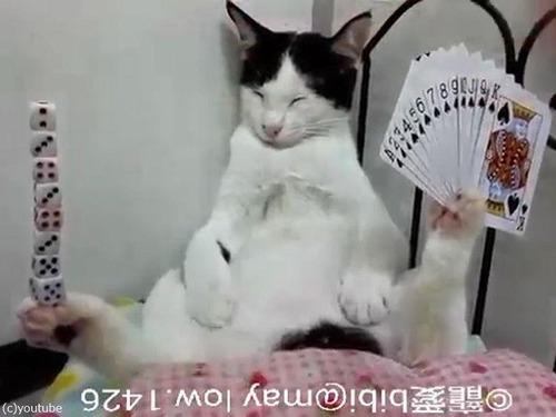 足にサイコロを積み上げる猫05