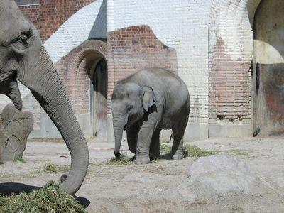 ゾウが転倒したときの表情TOP