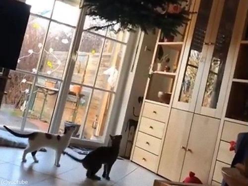 逆さツリーと猫00