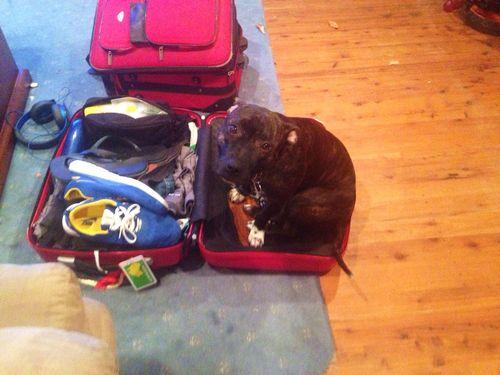 旅行と犬01