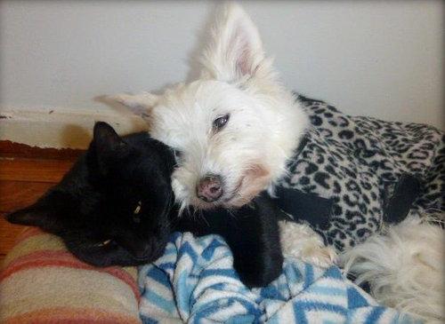 誰にも心を開かなかった犬が、猫と親友に03