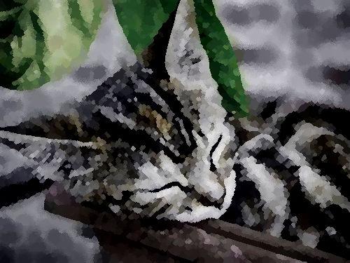 6歳のときの猫、大学卒業前の猫00