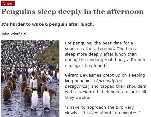 ペンギンの睡眠01