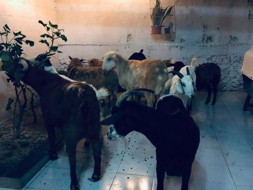 ハリケーンで300匹の犬を自宅で保護05