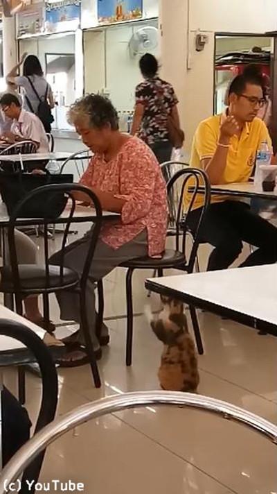 フードコートで猫がおねだり01