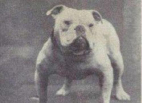 犬種は100年でこう変わった21
