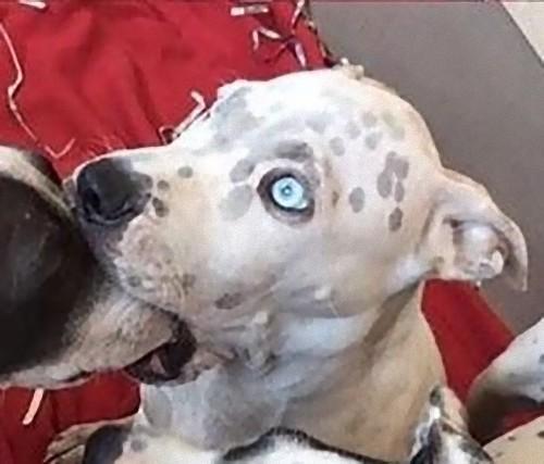 犬のあくびが中断されたときの表情03
