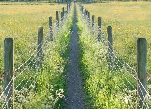 イギリスの牧草地