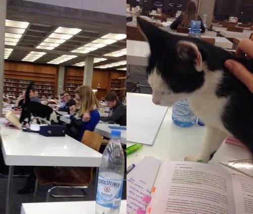 ドイツの大学で暮らす猫14