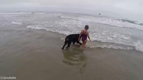 女の子を波から守る犬02